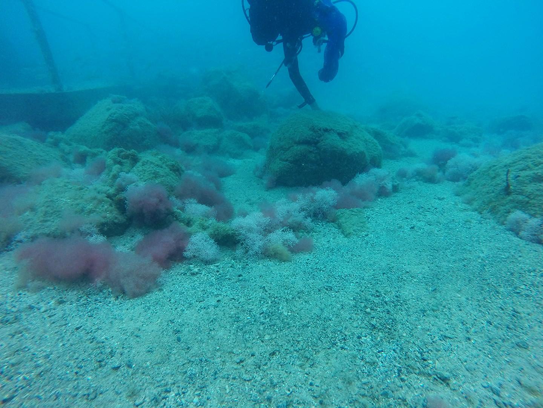 Algae deterioration